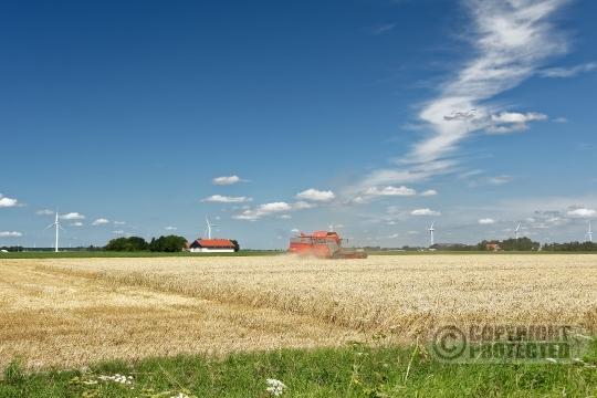 Tarwe oogst Flevoland
