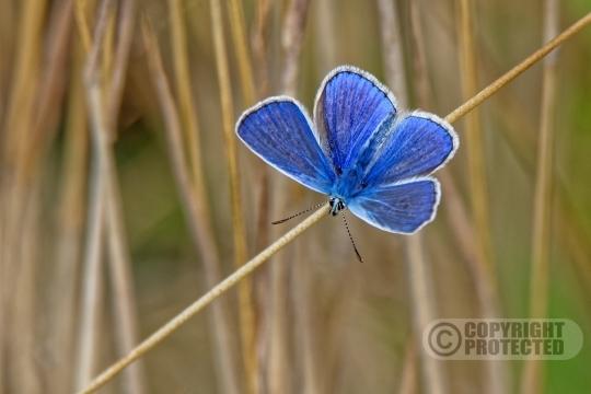 Vlinders  & Libellen (14)