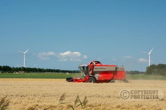 Tarwe oogst