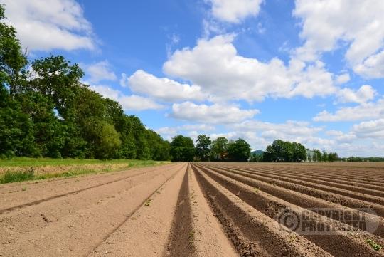 Aardappelruggen Noordoostpolder
